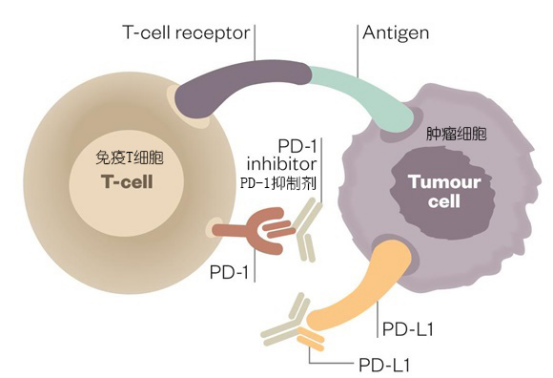 PD-1抑制剂