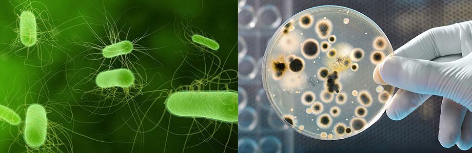 抗生素耐药感染