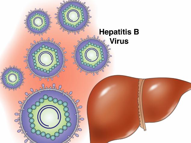 有乙肝意味着什么_患有乙肝长期服用抗病毒药,可否能要孩子