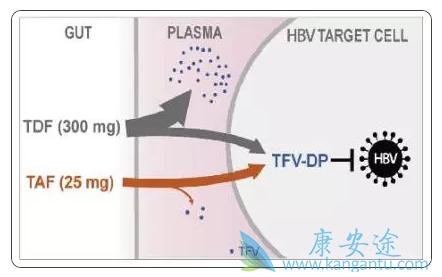 25mg剂量TAF与300mg剂量TDF的疗效对比