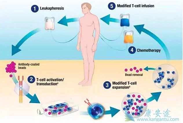 CD19靶向治疗
